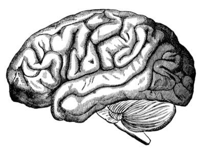 How Much Does A Brain Weigh, And Other Unusual Facts About Man featured image