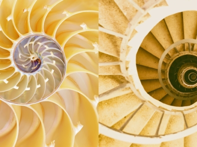 Biomimicry: Emulating Nature's Designs featured image