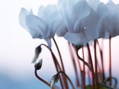 2 Must-Grow Flowers To Help You Survive Winter featured image