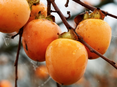 Persimmon Lady's 2019-20 Winter Forecast featured image