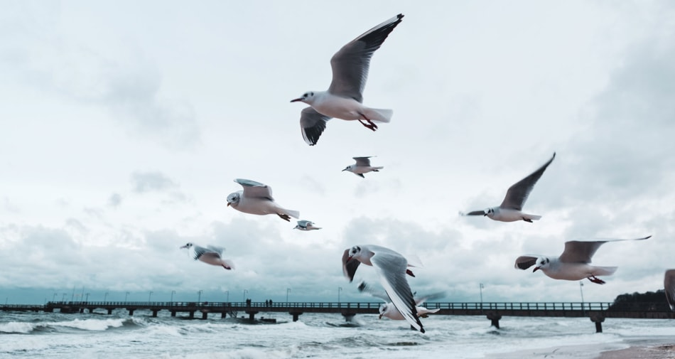 Birds flying in a hurricane by the sea.