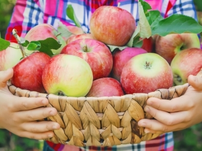 10 Must-Read Fall Apple Picking Tips featured image
