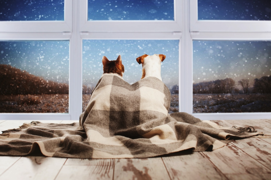 Dog and cat under a plaid blanket looking out the window.