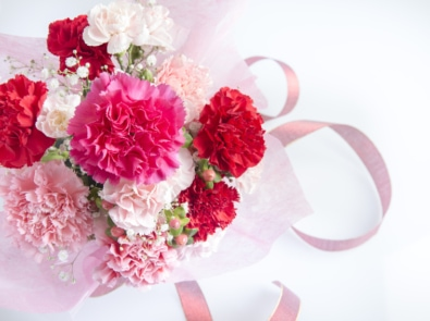 January Flower Lore: Carnations featured image