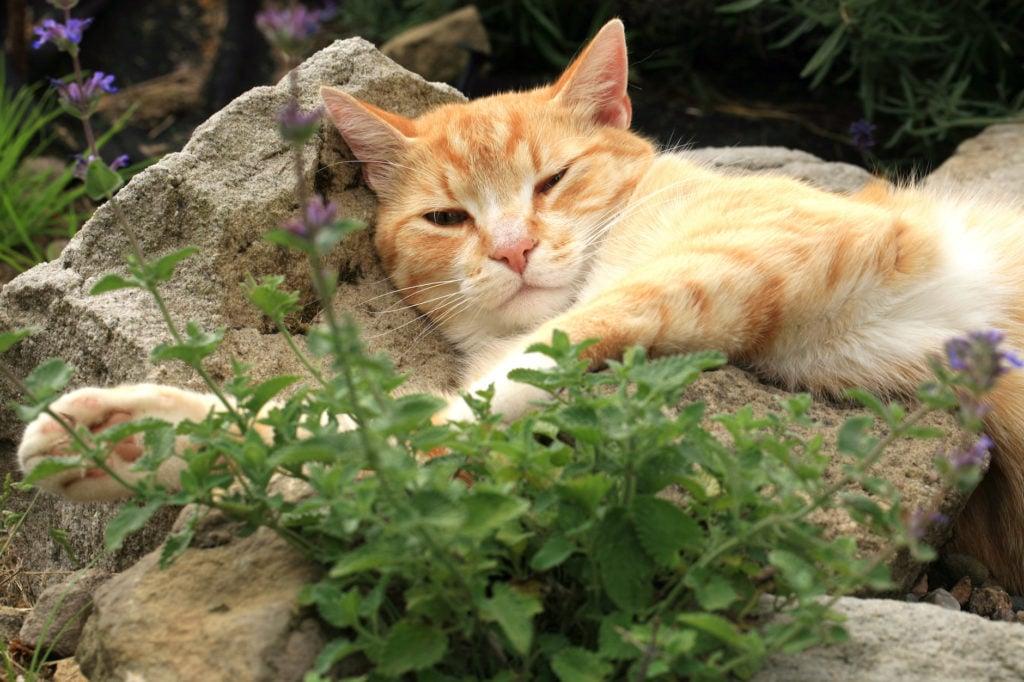 Plants! Catnip...it/'s not just for kitties!!