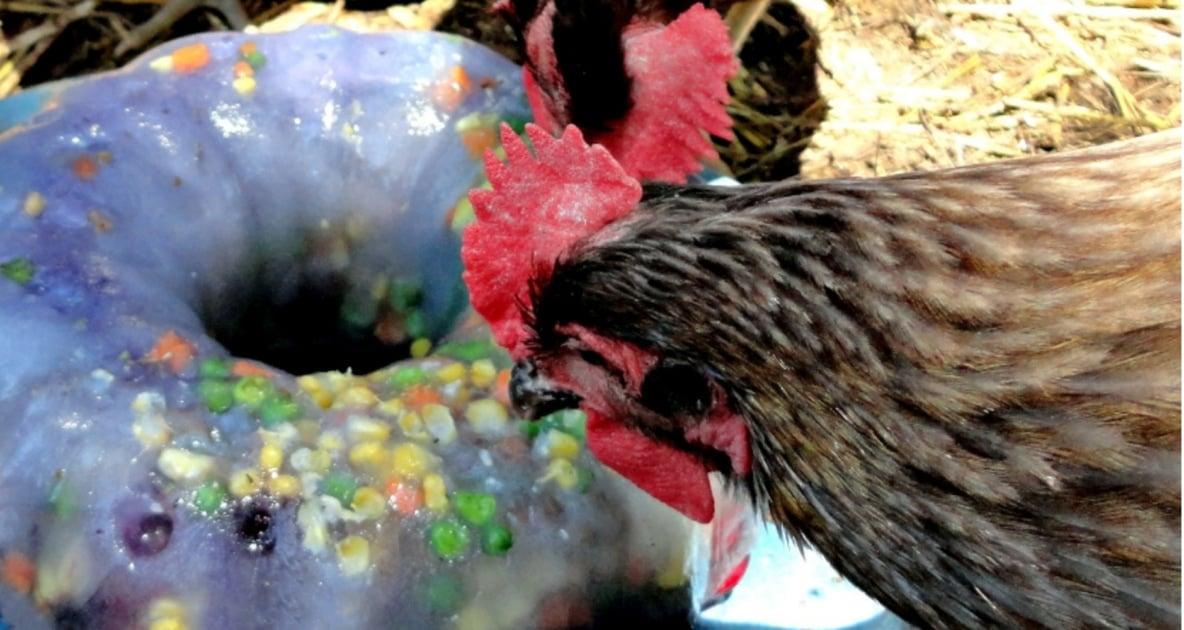 Chicken - Fresh Eggs Daily: Raising Happy, Healthy Chickens... Naturally