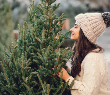Top 5 Fragrant Christmas Trees featured image