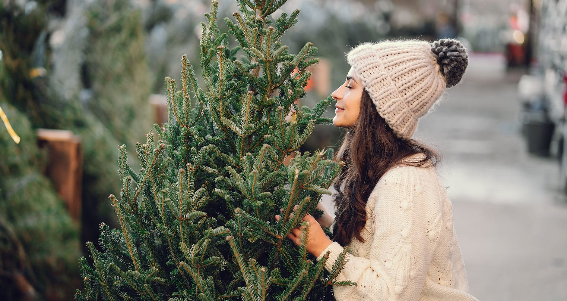 Top 5 Fragrant Christmas Treesimage preview