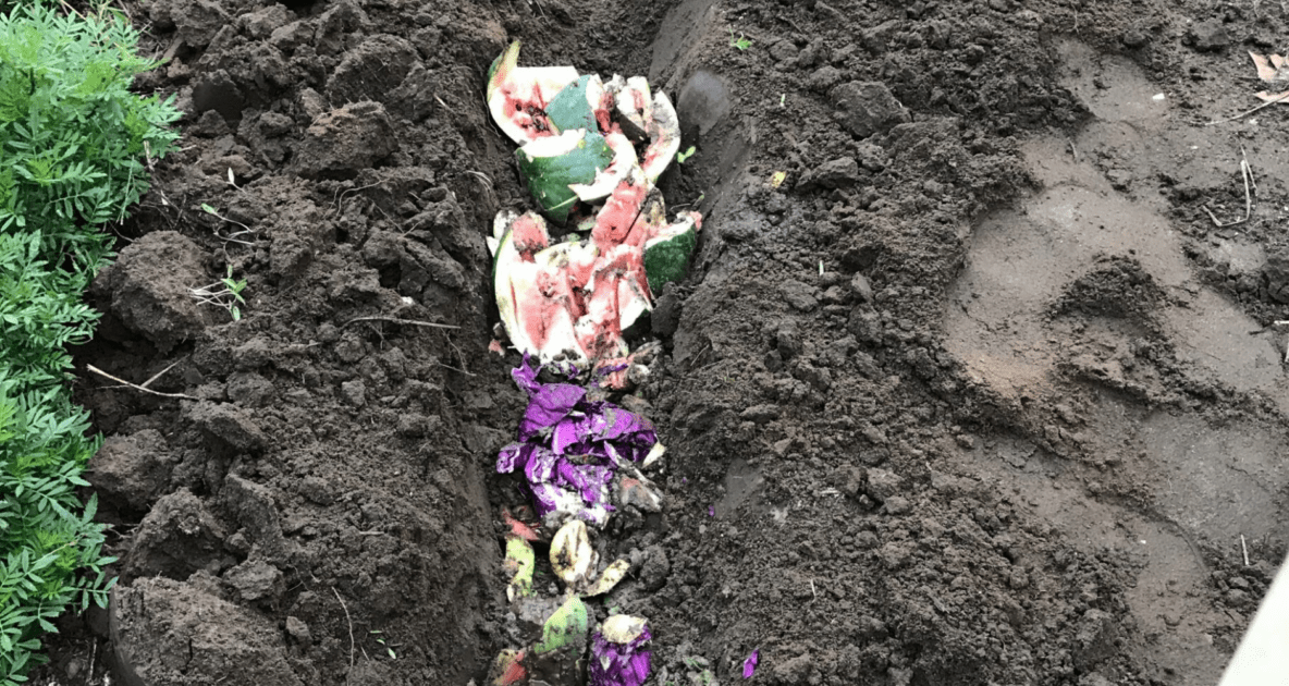 Soil - Compost