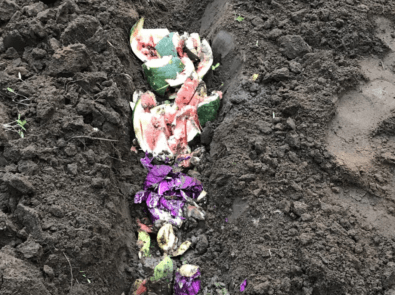 Trench Composting With Kitchen Scraps featured image
