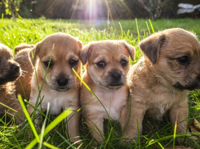 5 Fun Facts About Puppies For National Puppy Day (March 23) featured image