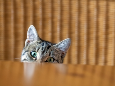 7 People Foods Your Cat Should Never Eat featured image