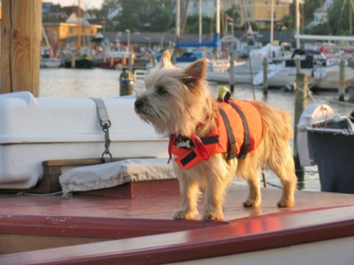 7 Safety Tips For Boating With Pets featured image