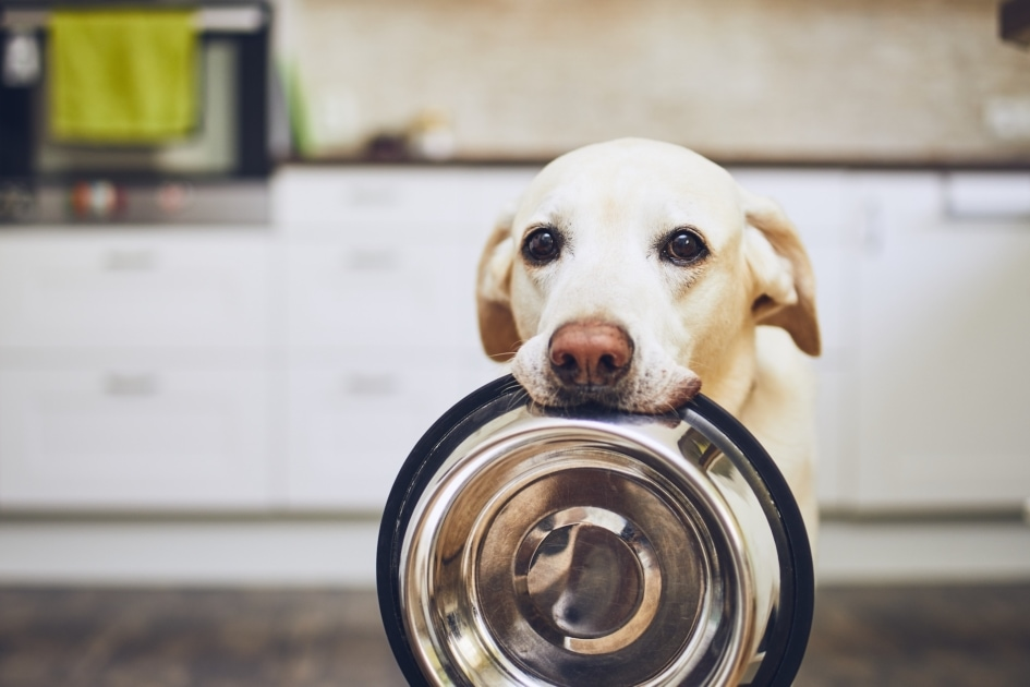 Dog - Cat Food