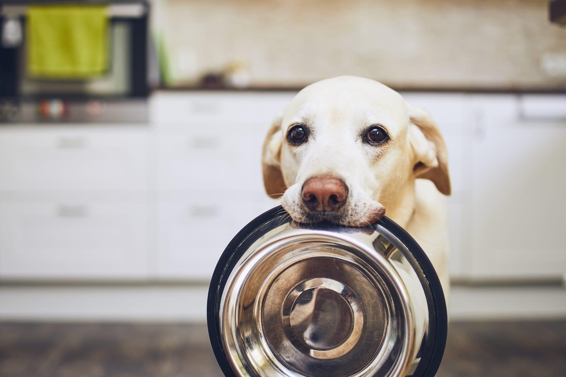 Can I Feed My Dog People Food? Farmers' Almanac