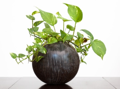 Houseplants Anyone Can Grow featured image