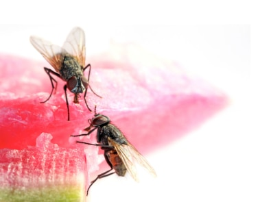 Natural Fly Repellents You Can Make In Your Kitchen featured image