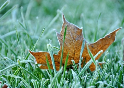 Time to Winterize Your Lawn! featured image