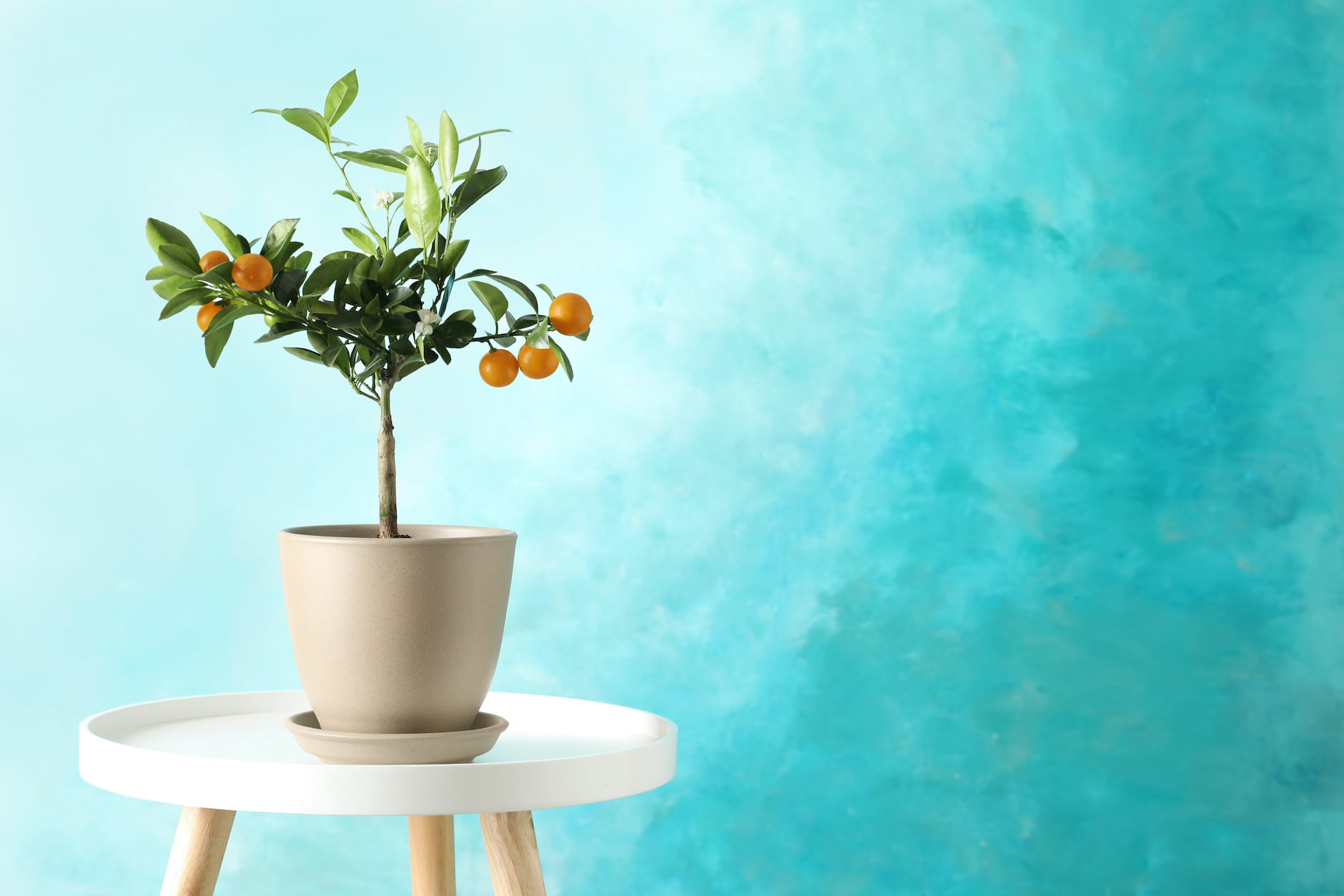 Grow Tropical Fruits In Your Living Room It S Easy
