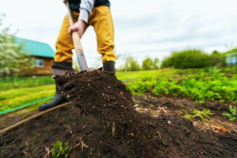 Man digging rich soil with a garden shovel.