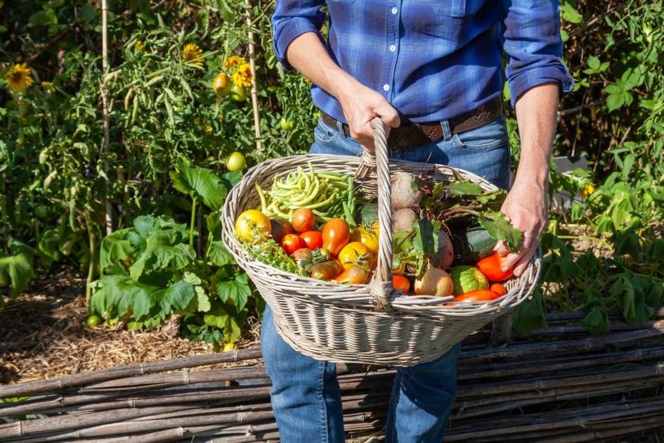 Harvest - Local food