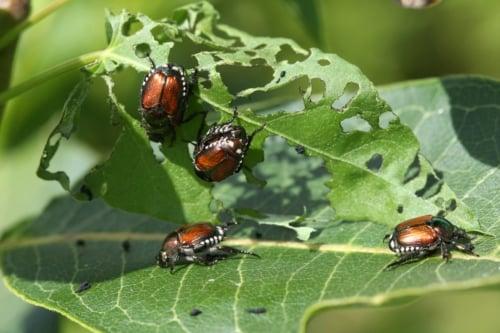 22 Ways To Combat Garden Pests Naturally
