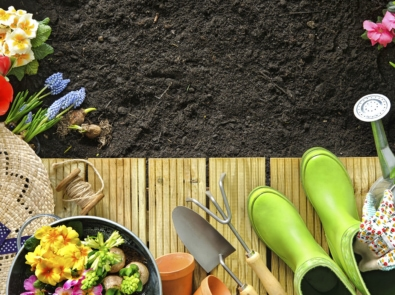 5 Popular Gardening Myths Debunked featured image