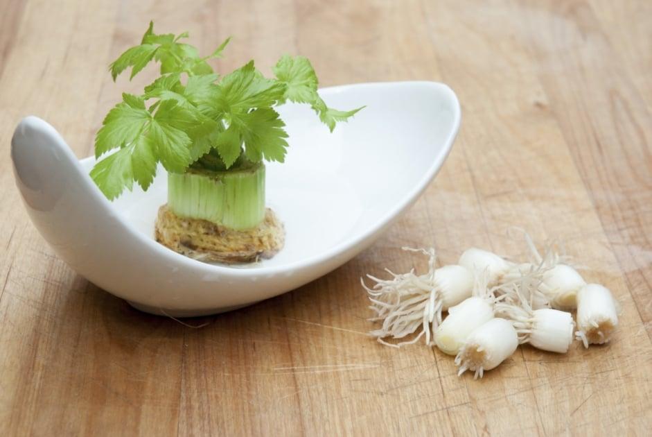 Plants - Vegetable
