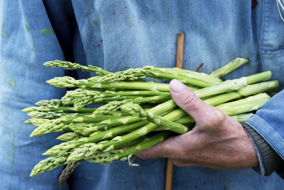 Garden asparagus - Vegetable