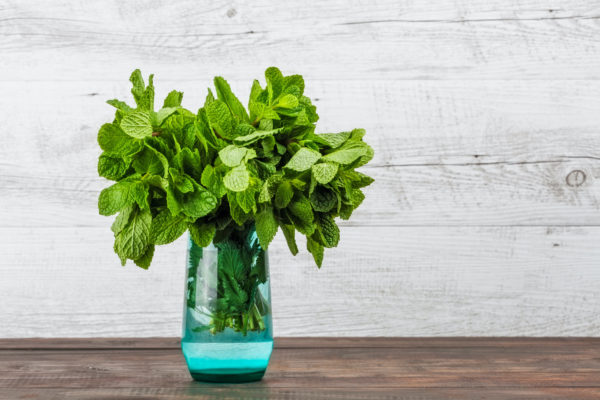 Bunch of fresh mint in colored glass on wooden background