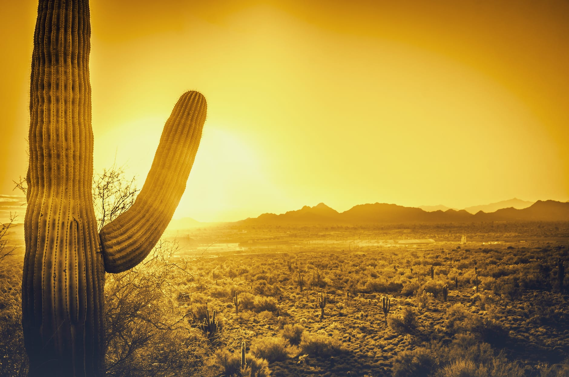 cactus with sun in background giving a yellow hue of scene