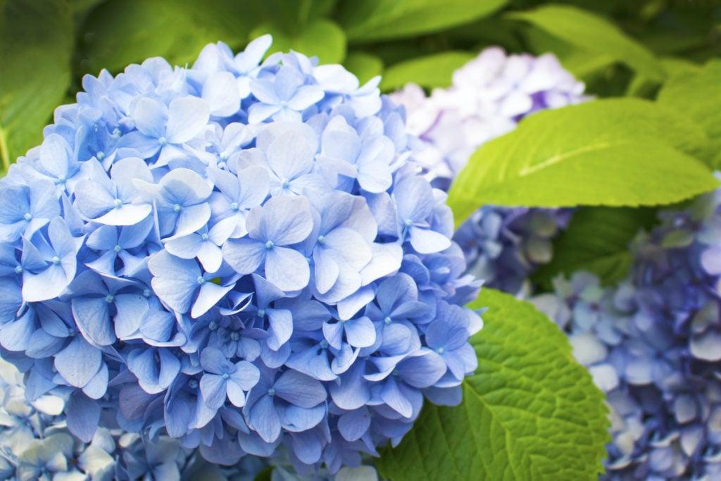 10 Weird And Wonderful Plants And Flowers Farmers Almanac