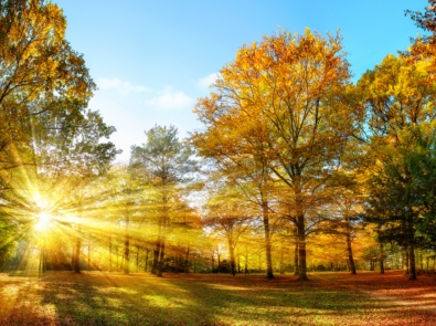 What Is Meteorological Fall? featured image