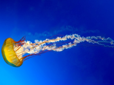 10 Cool Facts About Jellyfish You Didn't Know featured image