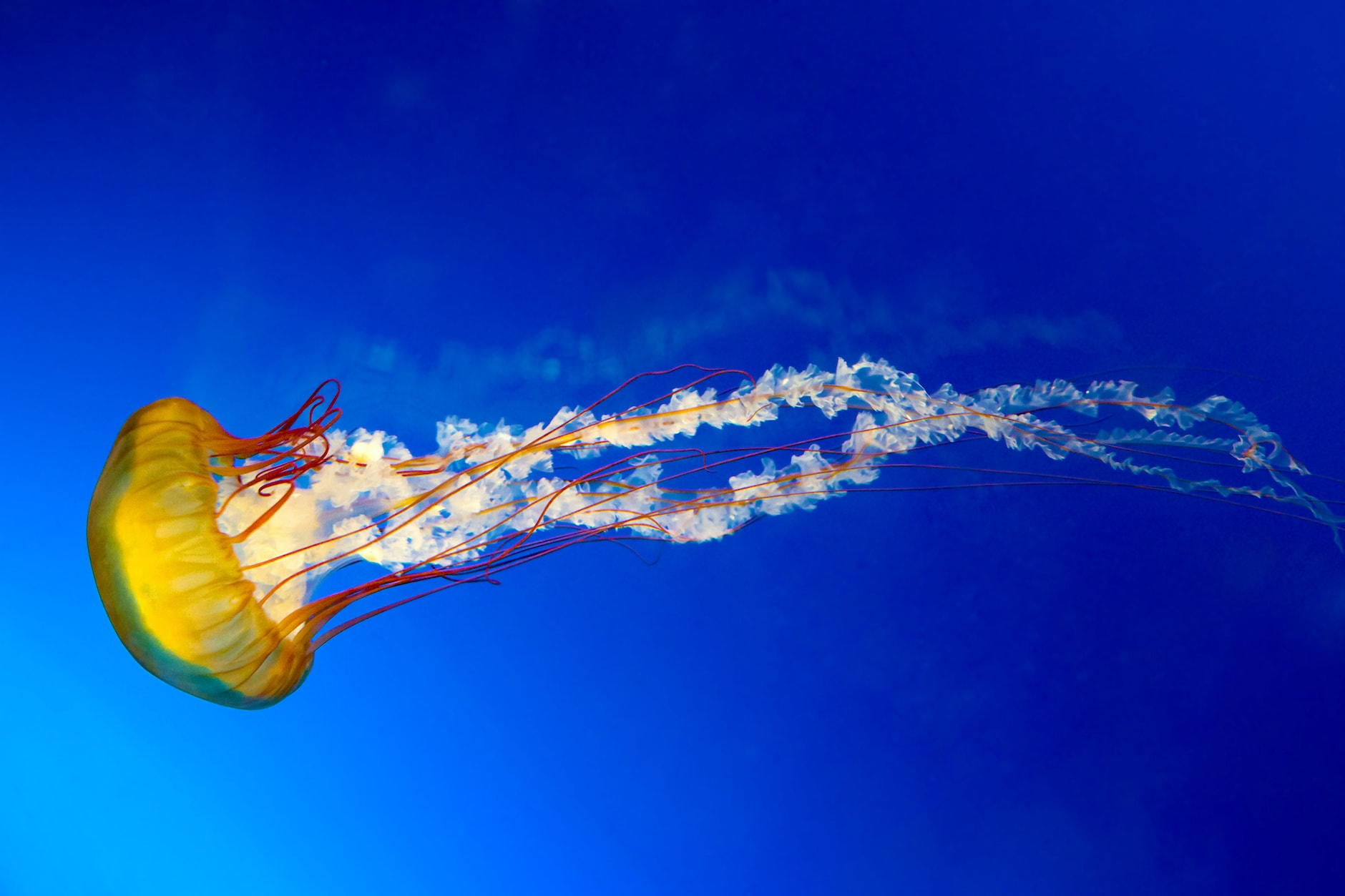 10 Cool Facts About Jellyfish You Didn't Knowimage preview