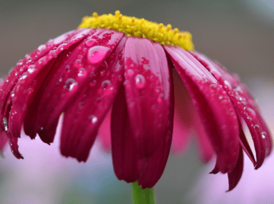 19 June Weather Lore Sayings You May Not Know featured image