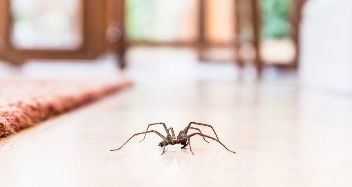 Spider - House