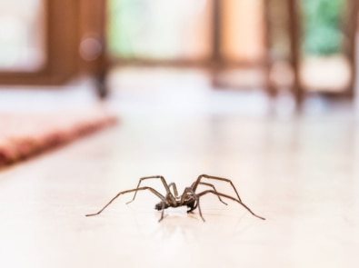 10 Natural Ways To Keep Spiders Out Of Your House! featured image
