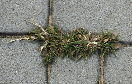 Kill weeds naturally image