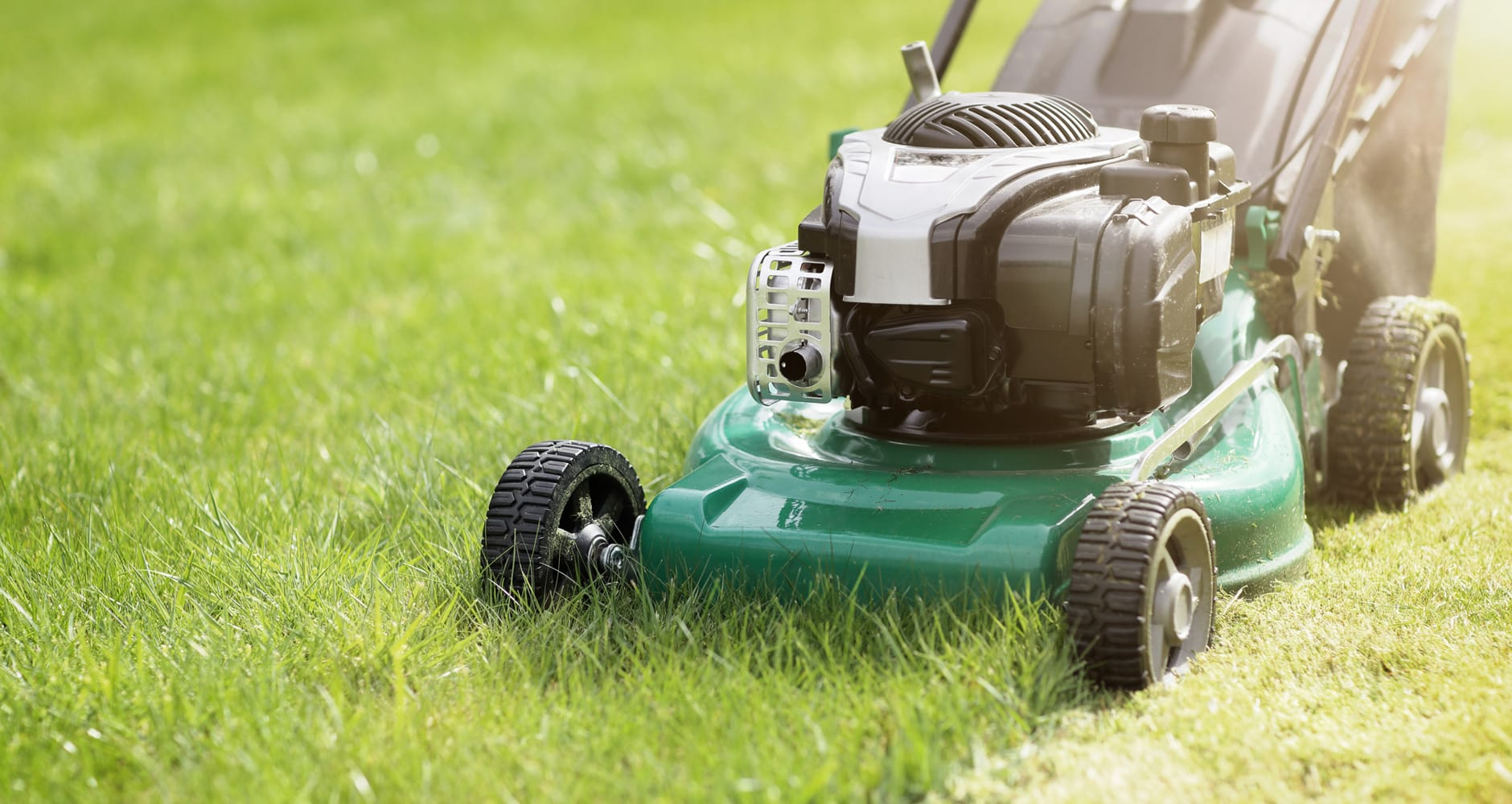 how to get rid of love bugs - mow your lawn