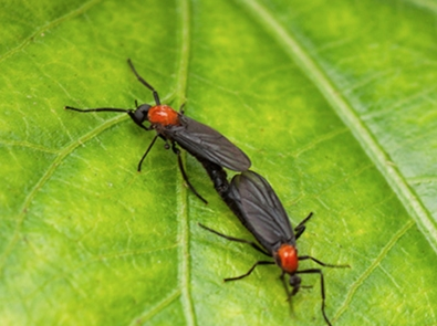 How to Get Rid of Love Bugs featured image