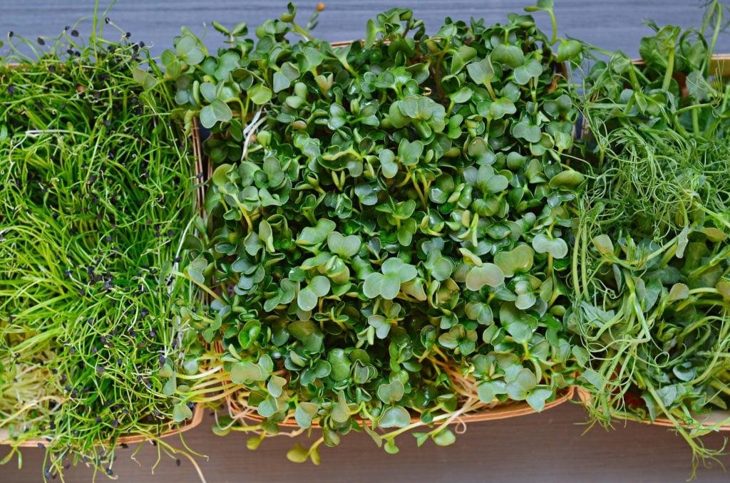 Herb - Microgreen