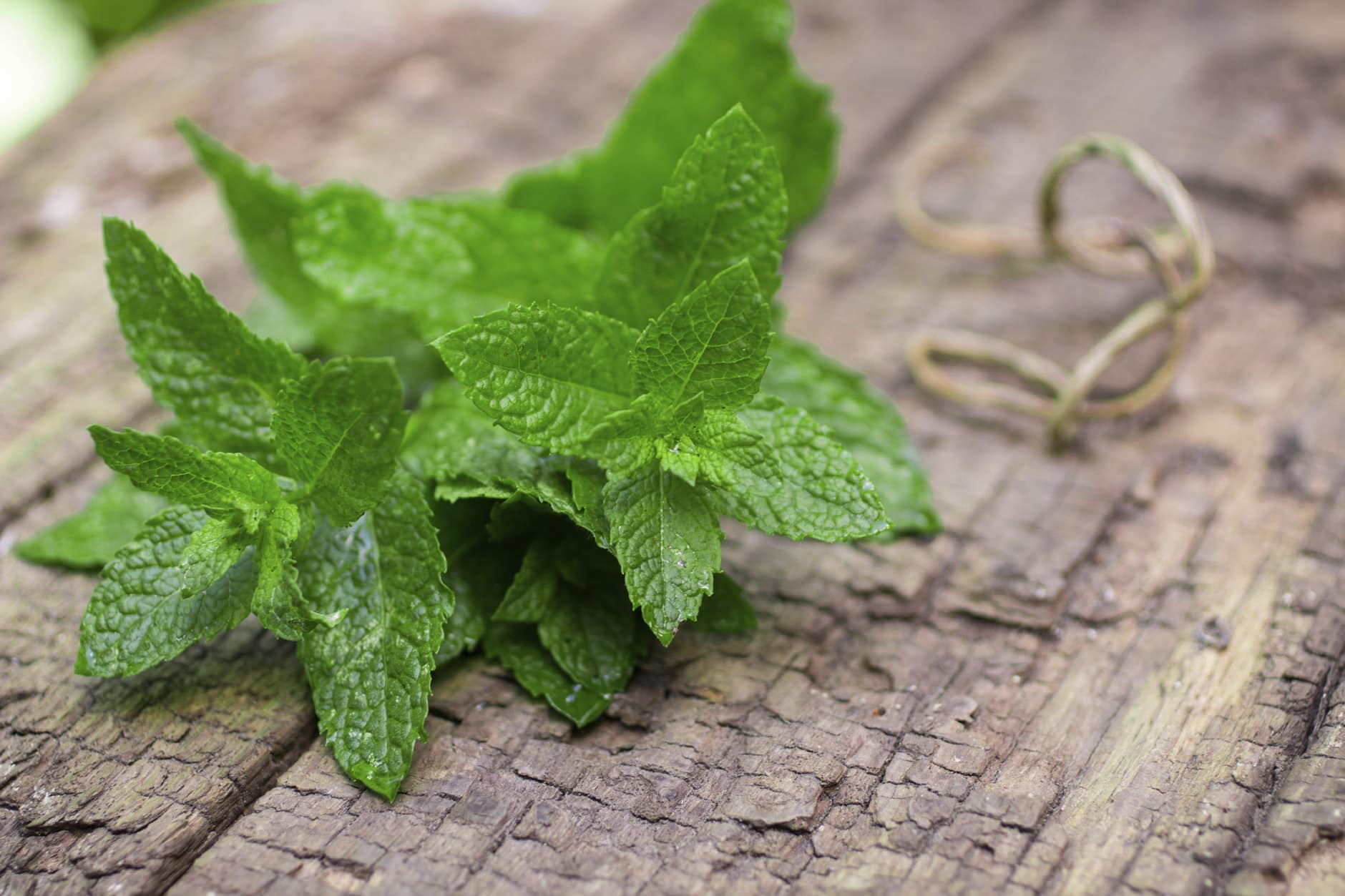 Mint Growing Tipsimage preview