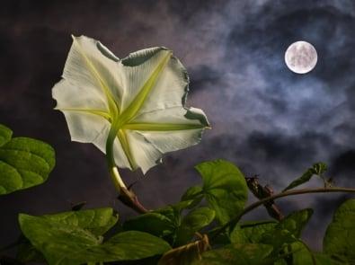 Creating A Magical Moon Garden featured image