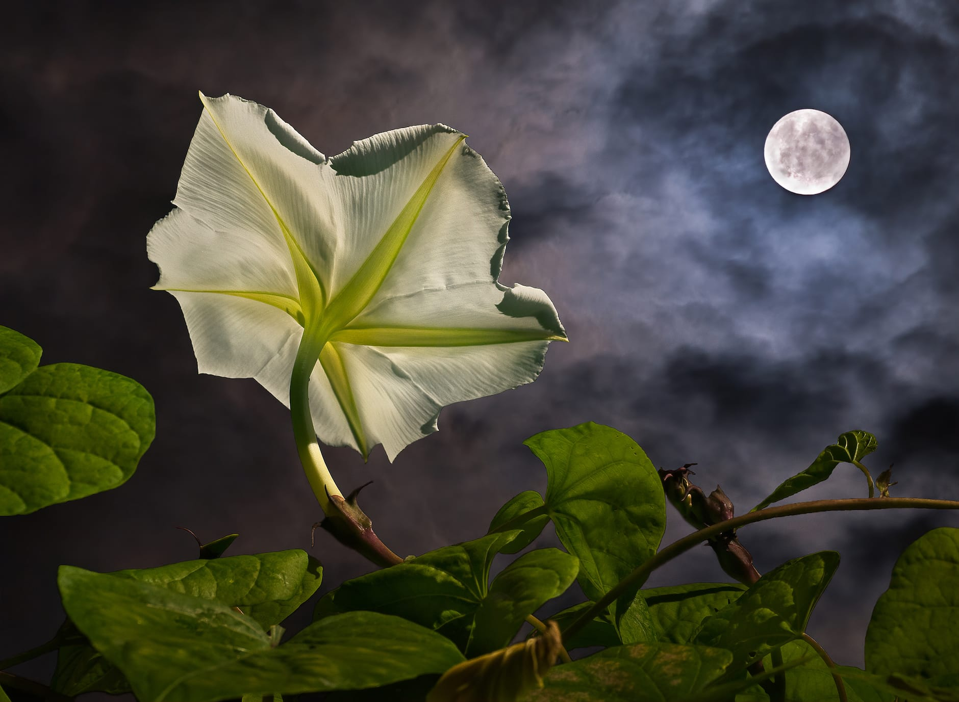 Create Your Own Magical Moon Gardenimage preview