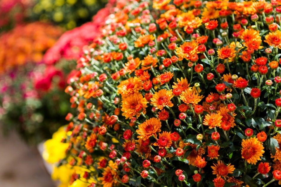 Flowering plant - Flower
