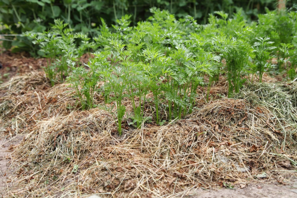 Mulch - Soil