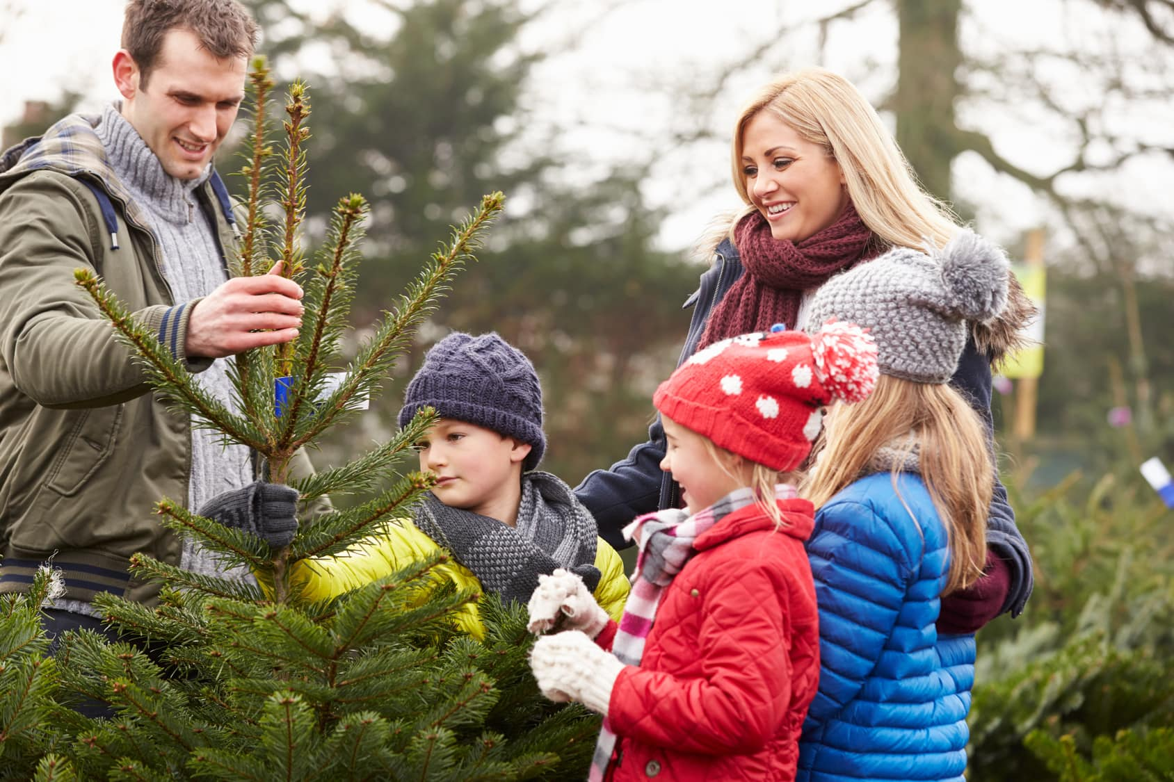 The Christmas Tree Dilemma – Real or Fake?image preview