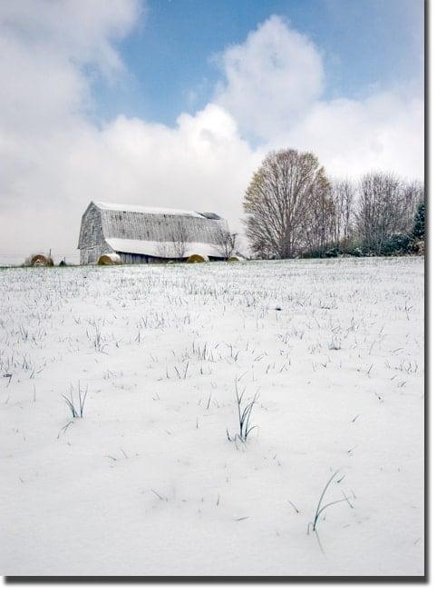 onion_snow2