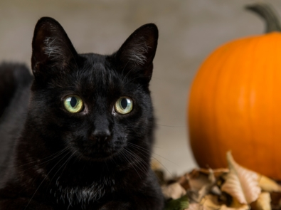 6 Ways You Can Make Halloween Safer For Your Pet featured image